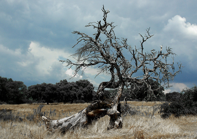 Dead Tree. Deserted farm. Guadalupe. Extremadura. Spain<br /> I've visited this tree several times but the sky in the background had always been too blue/harsh. I've desaturated a yellow to get an older feel to the photo.