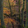 "<font color=""#e9efb7"">Autumn in the Woods"