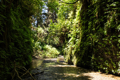 Landscape: Fern Canyon | Redwood National and State Park