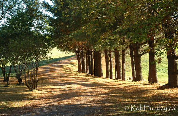 Counrty road in autumn. © Rob Huntley