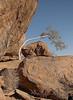 Tree and Boulder, Damaraland, Namibia