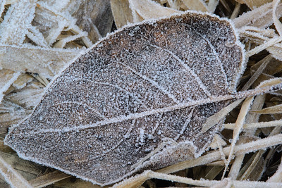 Frost at Rithet's Bog