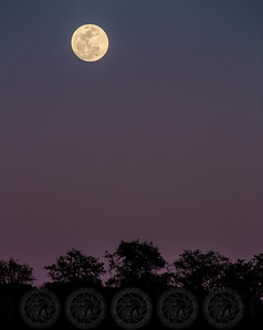 Fall Moonrise @ Wrights Field