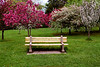 Bench amoung the blossoms