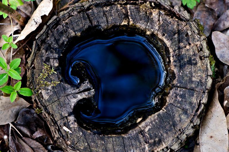 122 Shaw Garden 4-20-2008 - Water In Tree Stump 2 of 2 (nik contrast color range)