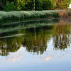 Trees and nature reflexions on a pond during sunset time