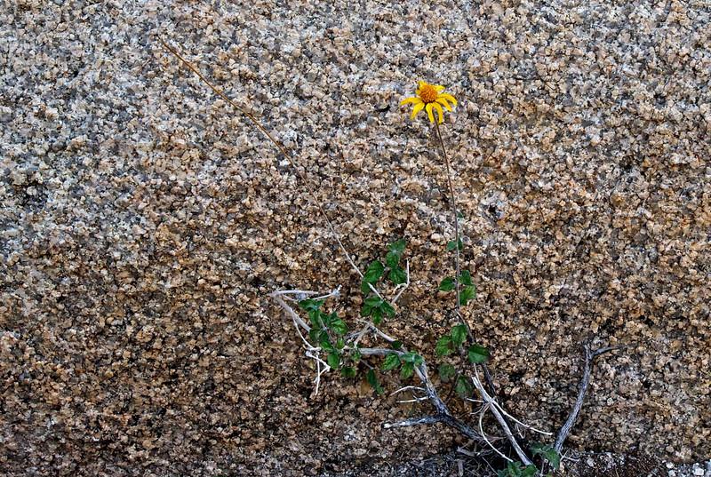 Joshua Tree National Park, California 2011