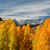 Fall color, Bishop, California, Landscape, Mt Whitney, Owens Valley Copyright Chris Collard - All rights reserved