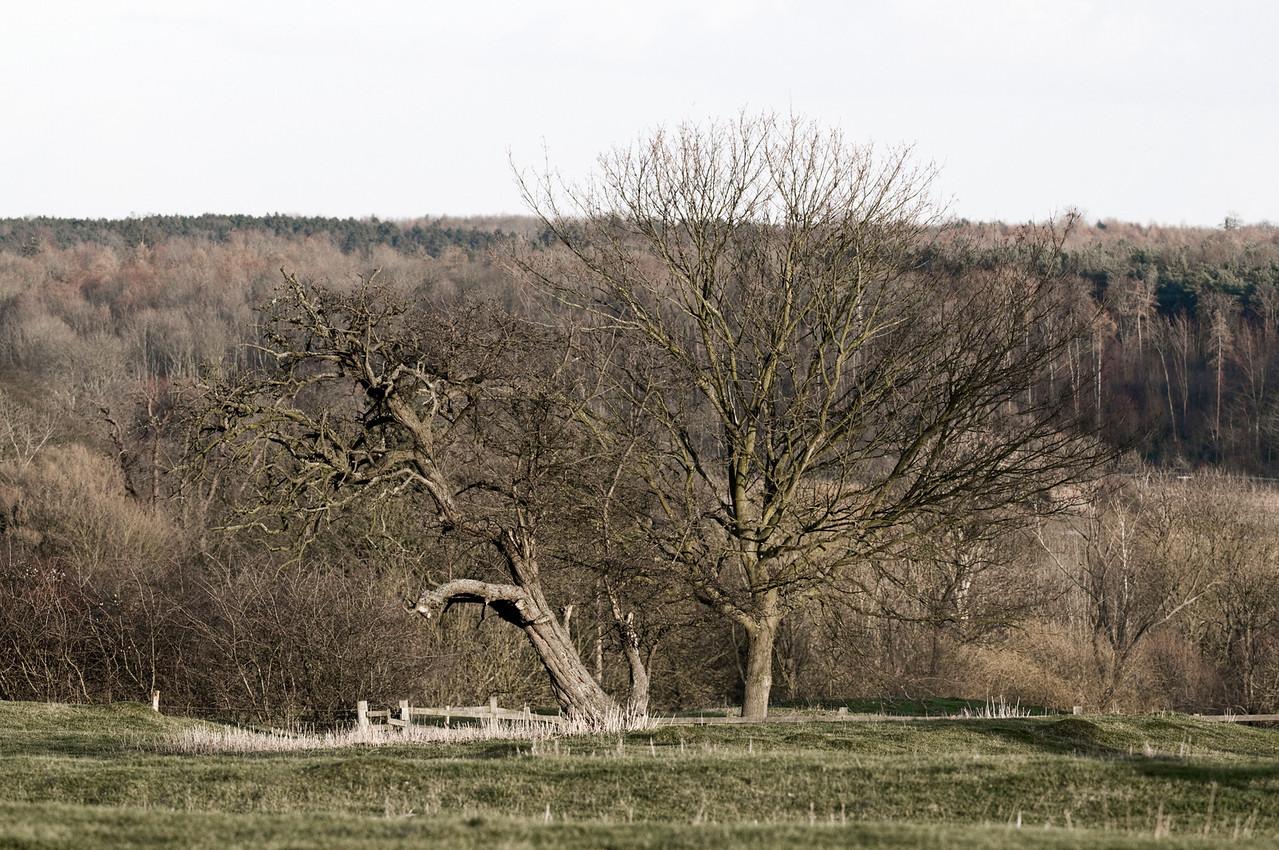 Trees near Wadenhoe church.