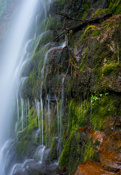 Timpanogos Mtn Trail06-25-2014-105