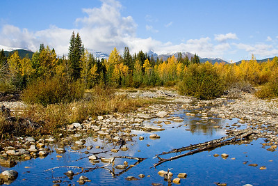 Fall colours in Alberta - Mist Creek is off HWY 40, south of Highwood Pass.  Though much less dramatic than what you can find out east, these fall colours are still quite striking.
