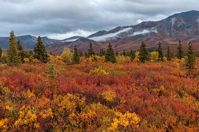 Fall Colors Explosion in Denali Denali National Park Alaska © 2013