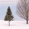 Never Ending Winter 2015