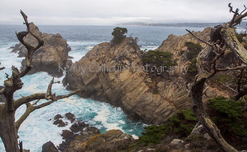 Point Lobos _N5A8359