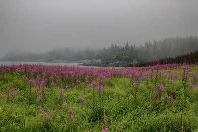 Wildflowers on the foggy coast