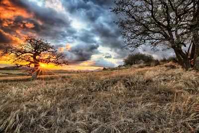 Golden Glow @ Wrights Field