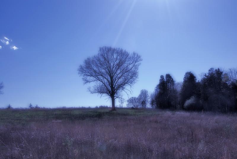 033 Shaw's Nature Reserve (dreamsuit1
