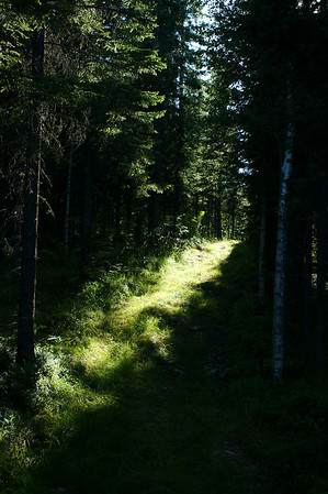 Metsätie - Forest trail