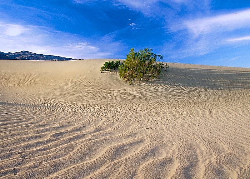 Dune and shrub, Death Valley National Park, California