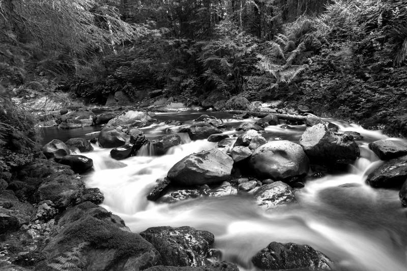 Owl Creek, Olympic Rainforest