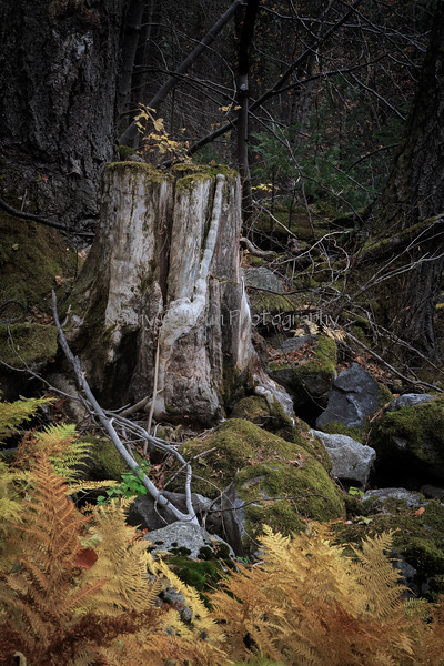 Yosemite 11-12-13 _N5A0469