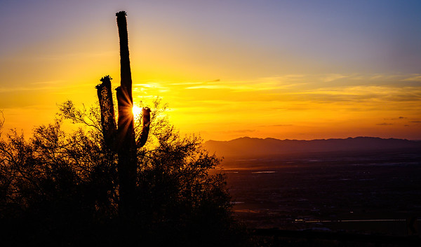 Sunset Saguaro, Phoenix, AZ