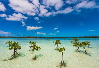 Tiny Mangrove Trees