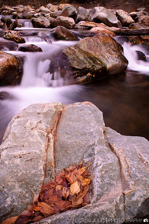 Big Cottonwood Creek Autumn Leaves 1