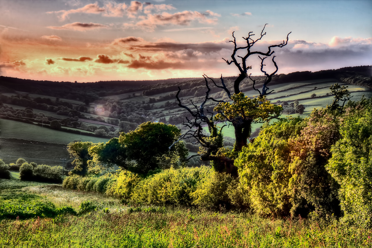 Devon Evening