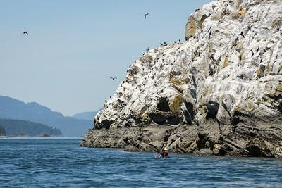 Mandarte Island and nesting Cormormants