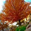 JPG-falltree