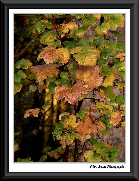 Climbing Leaves in Orchard Park in East Hillsboro, Oregon