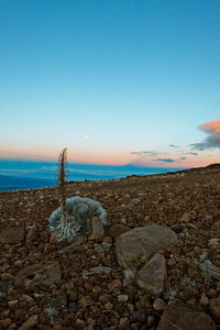 Silversword and sunrise on Mauna Kea; January 20, 2011; Big Island, Hawaii