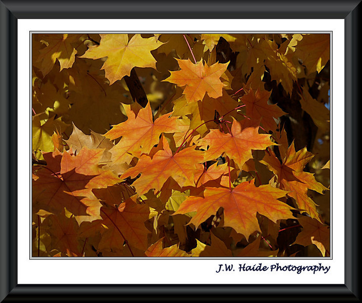 Shades of Orange Leaves