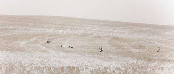 Spring Storm south of  Saskatoon