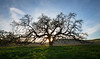 Bruce's Oak Sunset 2-17-20-2367