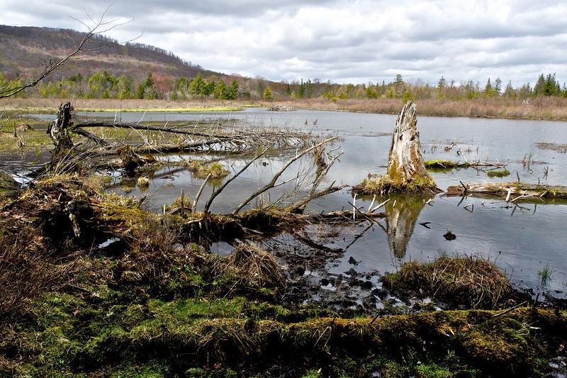 Beaver Pond, Canaan Valley NWR, West Virginia