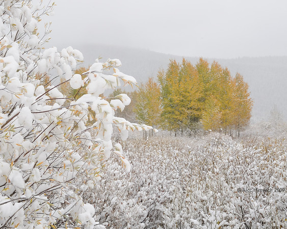 We took the Laurence Rockefeller Parkway to go from GrandTeton NP to Yellowstone NP with snow falling intermittentlly.  <br /> <br /> This was an early snow for this region.  As you can see the Aspens had not yet lost their leaves.