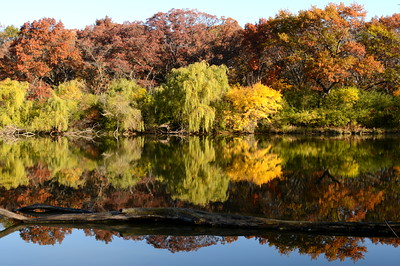 Fall in Illinois - Herrick Lake