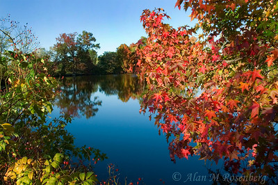 Oak Tree Pond-Edison, NJ Fall 2007