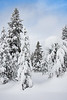Yellowstone National Park - After a Heavy Snowfall