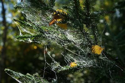 Seitti - Web
