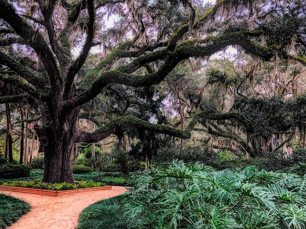 Washington Oaks Garden