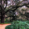 Washington Oaks Garden