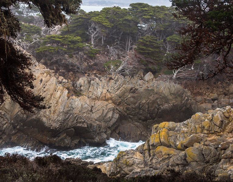 Point Lobos _N5A8339