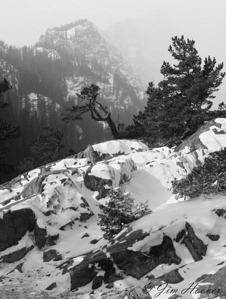 Wind blown tree near Dream Lake<br /> Rocky Mountain National Park