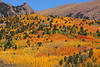 Fall colors near Cripple Creek Colorado, September 26 2010.