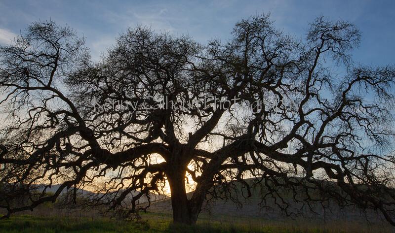 Bruce's Oak Sunset 2-17-20-2357