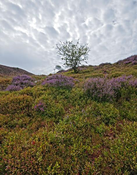 Precipice Walk Wales