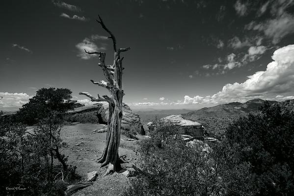 Windy Vista